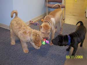 Playing tug in the indoor play area