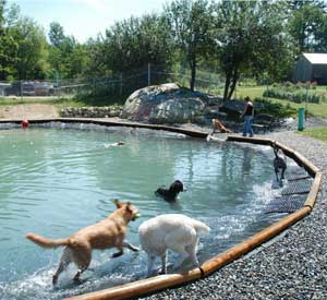 Dog Boarding And Daycare Facility Upper Valley Nh