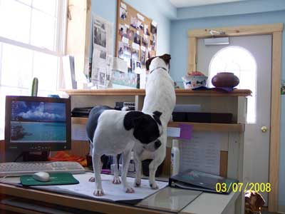 Bailey and Luna at front desk